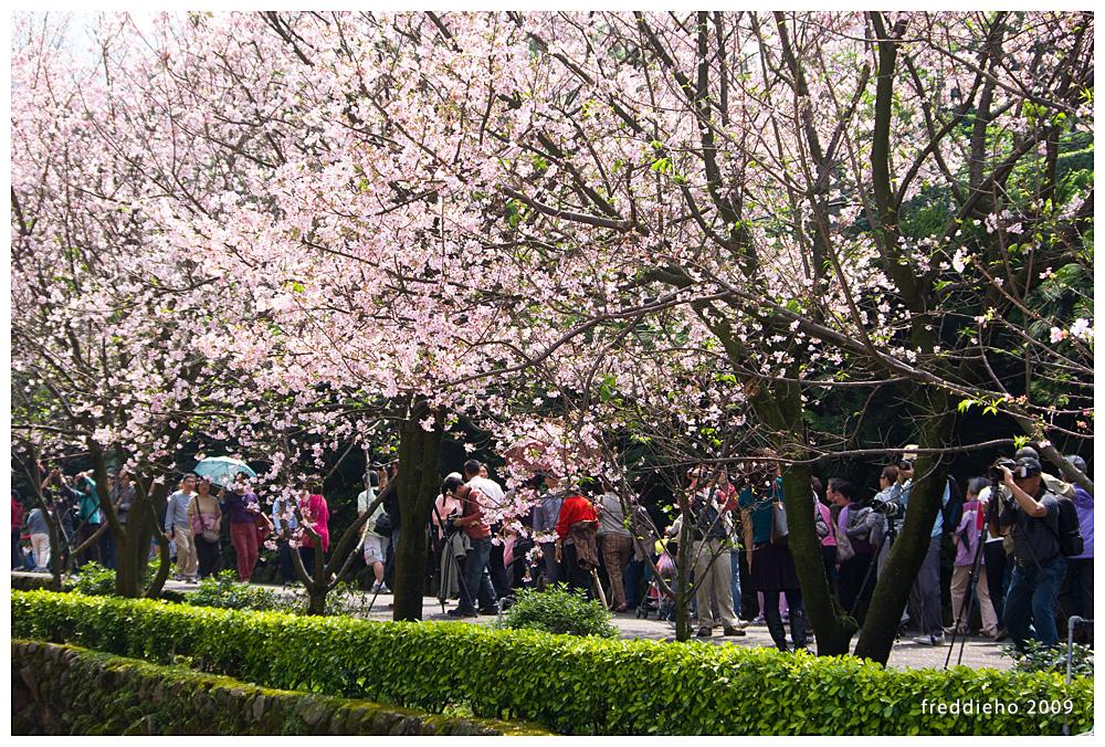 天元宮之春