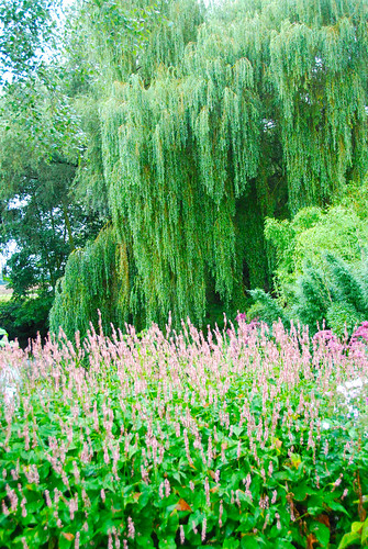 The Beth Chatto Gardens - (S)weeping into Pink!
