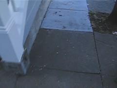 Sidewalk Naturalist
