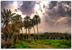 Is the most beautiful   (A.Alwosaibie) Tags: beautiful landscape is photo nikon shot angle wide spotlight most ksa d60 sigma1020mm alhasa     flickrsbest      vosplusbellesphotos aalwosaibie