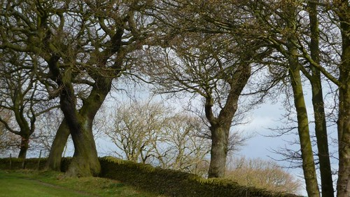 Oaks, Totley Hall Farm