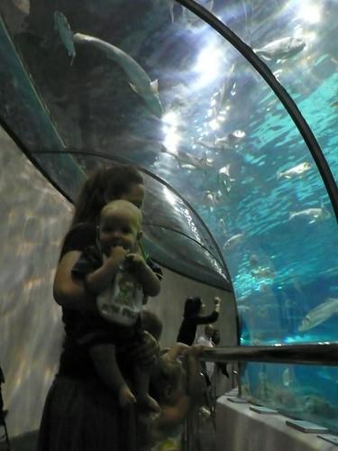 L'Aquàrium de Barcelona