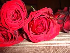 (Leen Ob ~) Tags: red white flower rose groom bride       maring   jore