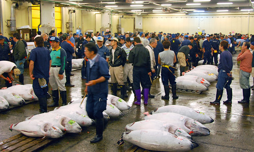 the tuna auction, tsukiji fish market