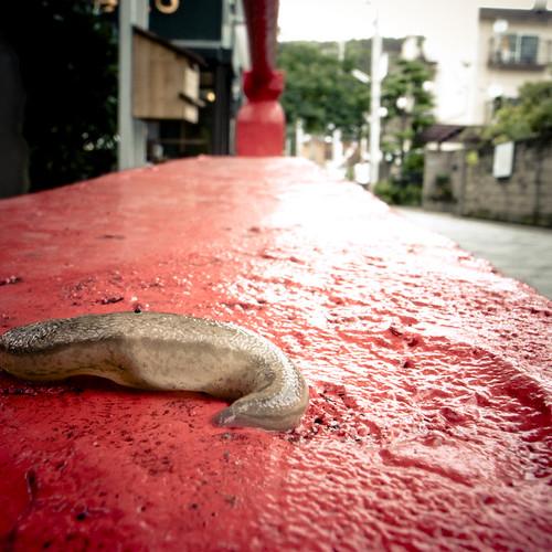 Sluggy Wuggy Slug