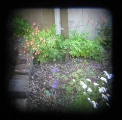ttv garden2
