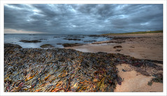 Seaweed Revealed (SarahPetersPhotography) Tags: sea seascape seaweed beach coast scotland highlands golspie lothbeg britishseascapes
