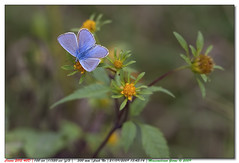 Fragile.... (maxxxmat) Tags: flower verde green canon butterfly eos petals fiore petali azzurro farfalla massimiliano naturesfinest padule 40d maxxxmat porcari ef300mmf28is