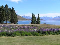 Lake Tekapo (weenomad) Tags: lake tekapo