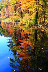 Reflection of Fall (Read2me) Tags: autumn pond trees leaves reflection norrisreservation norwell thechallengefactory superherochallengewinner pog friendlychallenges challengeyouwinner storybookchallengegroupotr achallengeforyouwinner thumbsupwinner ultrahero storybookchallengegroupttw abigfave yourock1stplace storybookwinner ultraherowinner mirrorser 3waychallenge4votes challengegamewinner thechallengegame top20autumn anythinggoeschallengewinner gamewinner bigmomma storybookttwwinner ultimategrindwinner flickrchallengegroup flickrchallengewinner pregamewinner cy2 pog2 gamex2winner x2 gamex3winner gamex3gamex2vsgamex2winners x3 agcgwinner agcgmegachallengewinner agcgcrèmedelacrèmewinner favescontestwinner 15challengeswinner agcgcrèmeofthecropchallengewinner challengeclubwinner perpetualchallengewinner