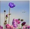 The lookout (2) (Nespyxel) Tags: flowers dof depthoffield fiori fuoco tulipan tulipani sfuocato nespyxel stefanoscarselli tufototureto