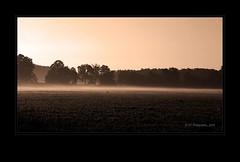 Morning Breaks (ICT_photo) Tags: morning trees summer fog sepia sunrise guelph treeline ictphoto ianthomasphotography ianthomasguelphontario
