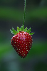 muaach~! (tropicaLiving - Jessy Eykendorp) Tags: red green fruit indonesia yummy strawberry fresh simply ef70300mmf4056isusm canoneos50d tropicaliving jessyce tropicalivingtropicalliving muaach~