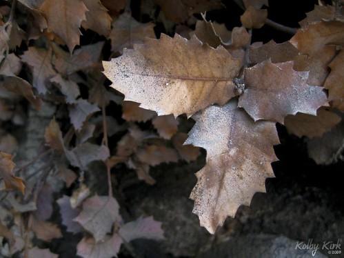 February Leaves