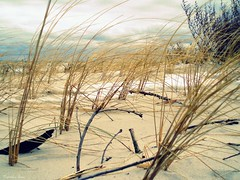 (anka.anka28) Tags: sea beach grass sand trawa morze plaża jastarnia półwysephelski mywinners piach helpenincula