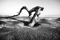 (Effe.Effe) Tags: blackandwhite bw desert wideangle bn senigallia biancoenero 10mm sigma1020 desertificazioneemozionale emotionaldesertification cisipotrebbevedereuncuore