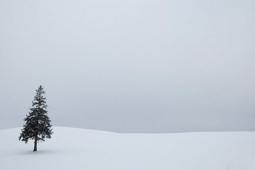 フリー写真素材, 自然・風景, 樹木, 雪, 日本,