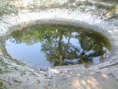 Pond (SREEJITH RAJAN S) Tags: water kulam alappuzha vellam sreejithrajan