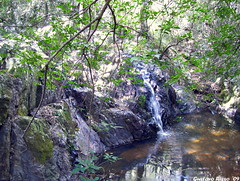 Peace. (...Gus...) Tags: light tree luz water de arbol la waterfall agua rocks day dia cerro cruz rocas cascada chicote mywinners citrit goldstaraward