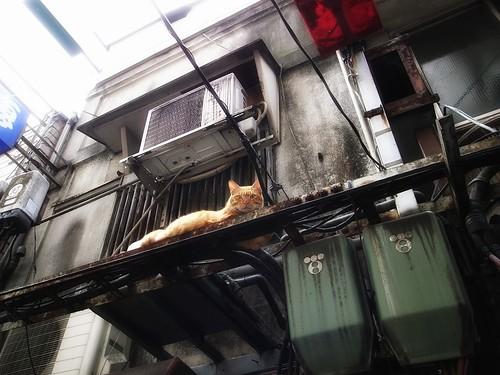 上に猫あり
