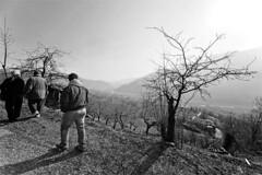 A vernal walk (-LucaM- Photography WWW.LUCAMOGLIA.IT) Tags: bw sun canon for spring walk go sigma bn persone una 5d su sole albero stroll fare controluce 1224 camminano primaverile