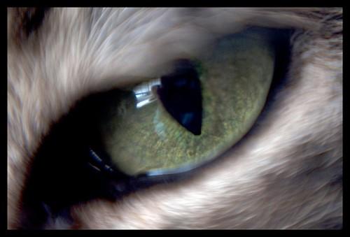 Henry's eye