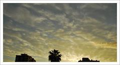 Sunset (LinoPhilippe) Tags: chile santiago nikon nikkor 000 d60 1855mmf3556gvr chilesantiagonikkornikoncatscatgatosgato1855mmf3556 chilesantiagonikkornikoncatscatgatosgato1855mmf3556gvr