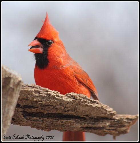 Pretty in red.