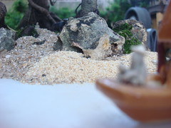 Penjing - Ficus retusa (Projeto Bonsai) Tags: arte paisagem ficus bonsai tropical miniatura chcara retusa penjing