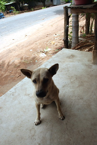 Isaan Village Shop Dog Thailand