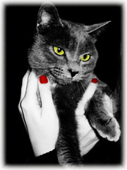 Witch (SwEeTcHy) Tags: red bw pet verde green azul cat rojo eyes bn nails ojos gato bruja uas ruso wicth