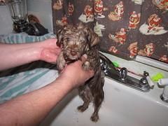 Poor Puppy!