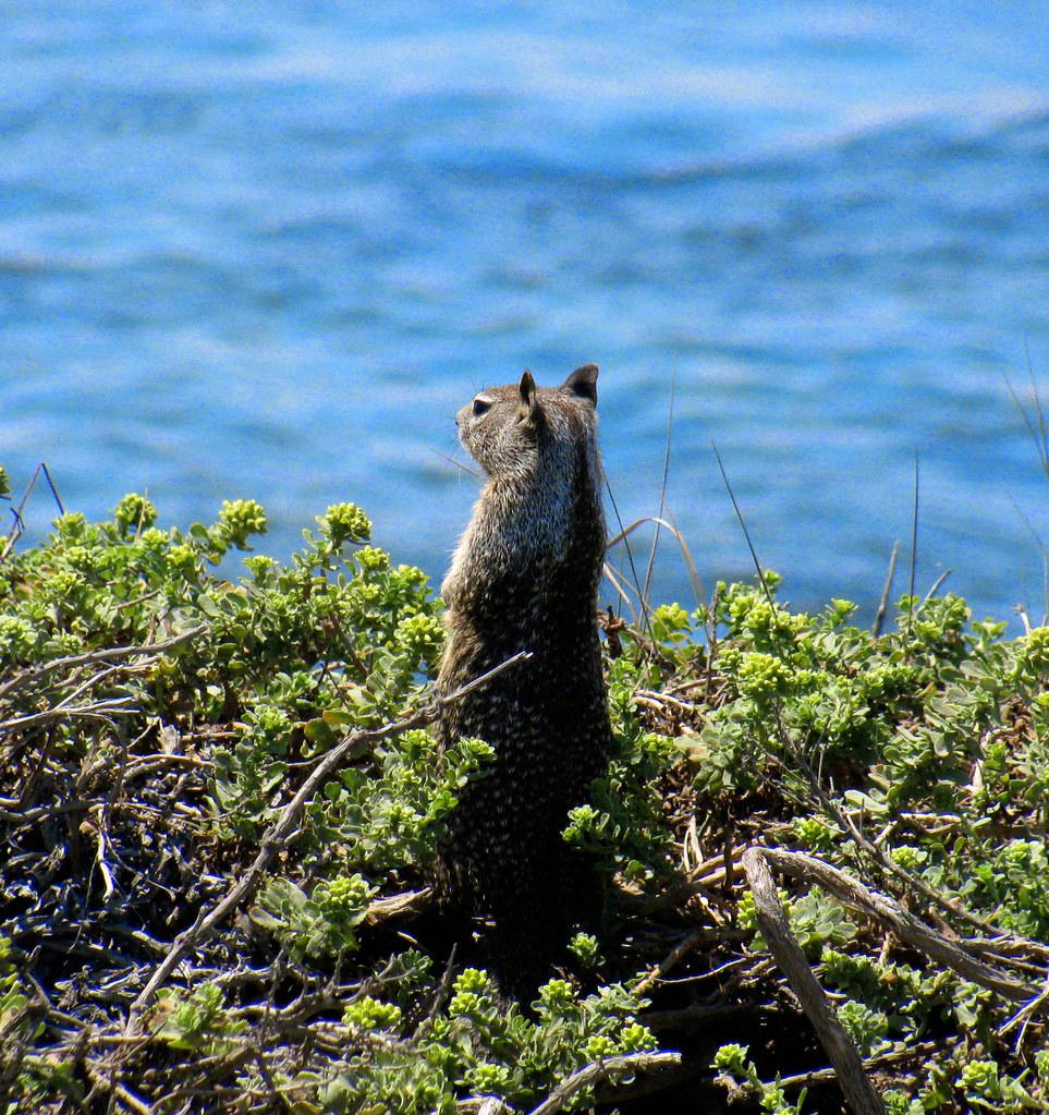 squirrelllookingatwater