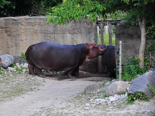 Zoo 234