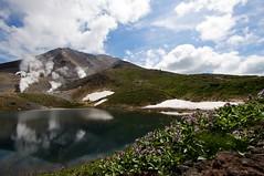 イワブクロと姿見の池