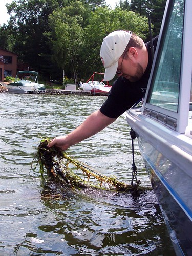 anchor cleaning
