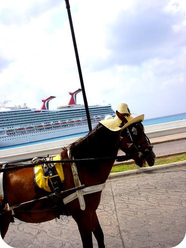 Cruise 130t