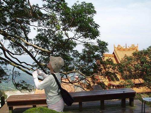 你拍攝的 圖片4-仙公廟一景。
