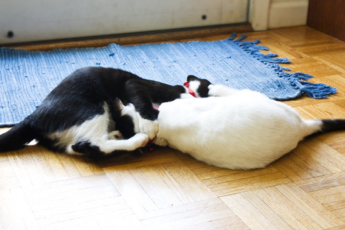 Dueling Kittehs 08