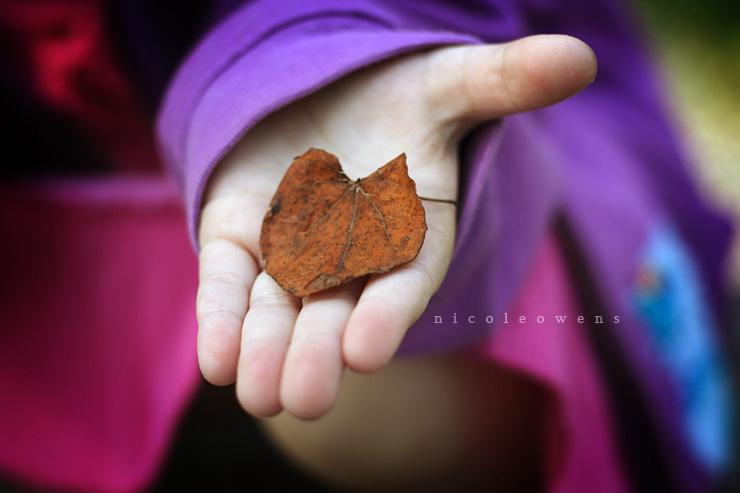 red bud leaf.