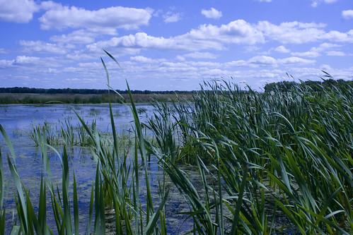 WetlandEmiquon08292009JGWard_MG_9019