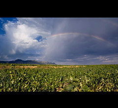 Arcoiris entre los viñedos (Juan Calderon) Tags: arcoiris landscape rainbow minolta sony paisaje explore cielo nubes tormenta alpha a200 uvas viñas briones viñedos palometa doblearcoiris sonydslra200 jcalderón dslra200 alpha200 spiritofphotography sonyalpha200 sonyalphadslra200 alphadslra200 logoroño sonydt16105 arcoirisentrelosviñedos juancalderón