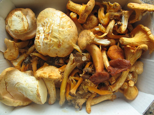 Mixed wild mushrooms