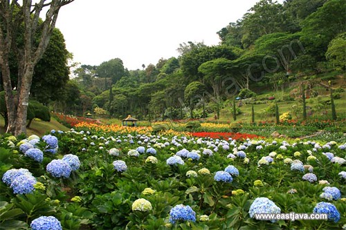 The Garden Flower In Selecta - Batu - East Java