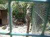 S4026137 (pappgabor) Tags: zoo veszprém 2007