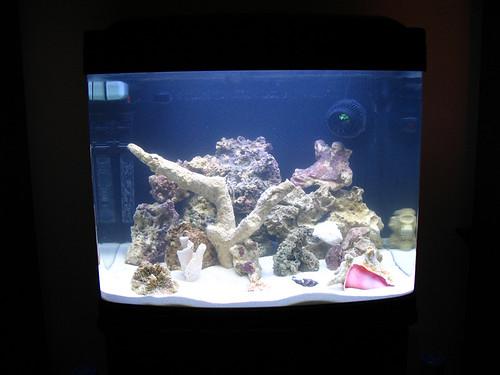 Saltwater Reef Tank - Day #1