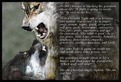 Cherokee Indian Wolves Parable (basicSUBLIMERER) Tags: fight wolf good indian evil battle saying story wise cherokee wisdom wolves parable
