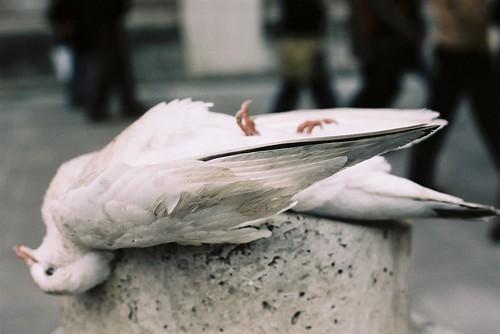 Dead Dove