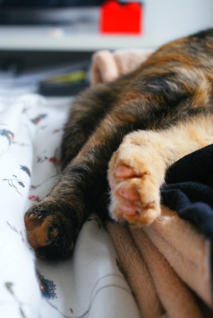 cute paw