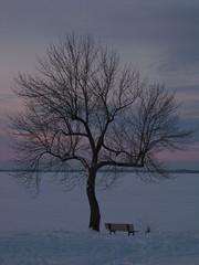 Solitude in winter (Sharon's Shotz) Tags: winter sky lake snow ontario canada tree ice sunrise bench interestingness solitude branches explore kingston lakeontario intersetingness